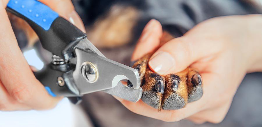 corte de uñas de perro