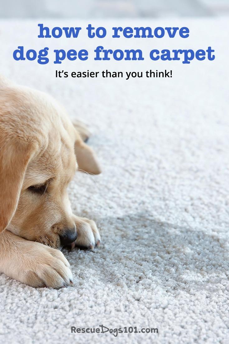 Olor a orina de perro fuera de la alfombra