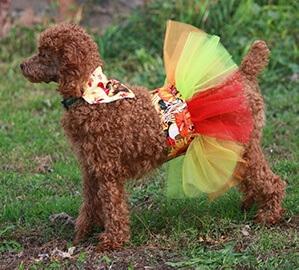 Traje de perro de acción de gracias bandana y tutú