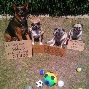 Chance and Parker's PAWSibility #90 - Losing our balls and staying studs