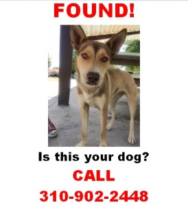 FOUND! Is this your dog?