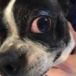 Luna Eye