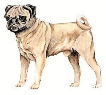 All About The Pug Philly Pug Short Nose Rescue Inc