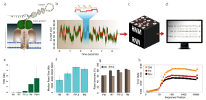 The Oxford Nanopore sequencing process and performance The motor | Download Scientific Diagram