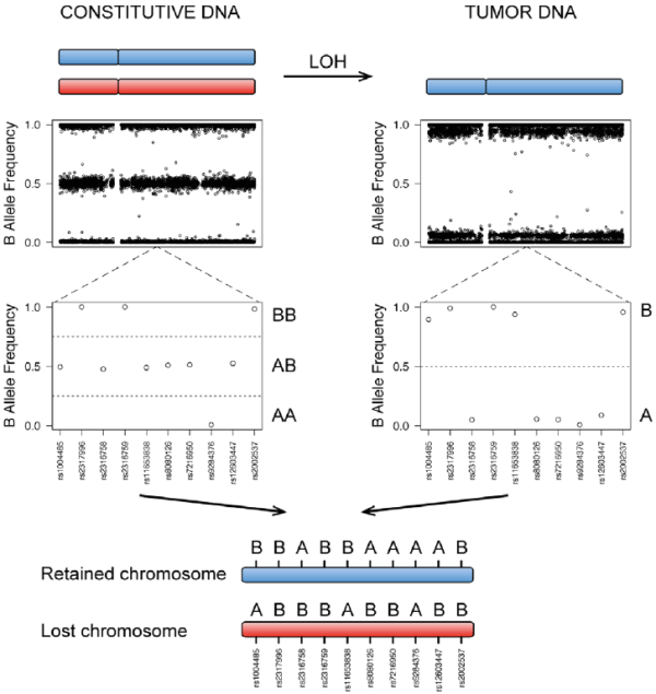 Haplotype inference from tumor SNP profiles. Genotypes can ...