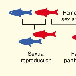 Parthenogenesis Birth Of A New Lineage Or