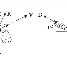 (a) Force diagram for a protobird flying upward with