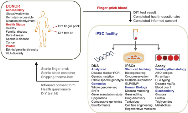 Integrative strategy for human induced pluripotent stem ...