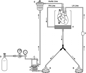 Simplified diagram of the ex vivo heart perfusion circuit