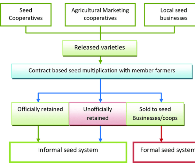 The Business Oriented Seed Enterprise Cooperative Fbsm Model And Its Links With The Formal