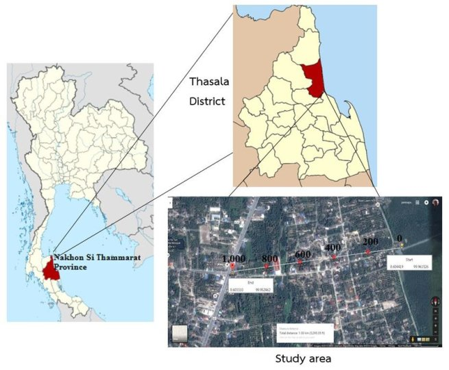 Figure      1  Map of the study site  The distance from mangrove forest     Map of the study site  The distance from mangrove forest area