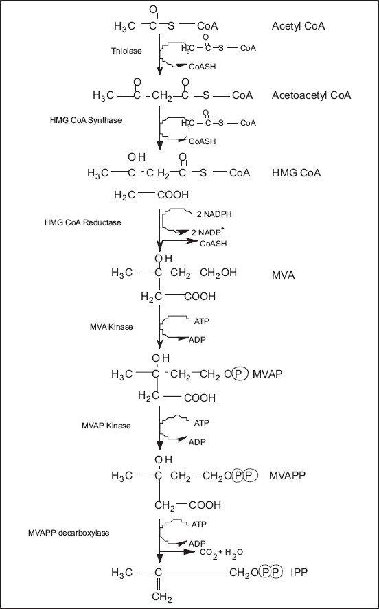Plant Leaf Cell Diagram