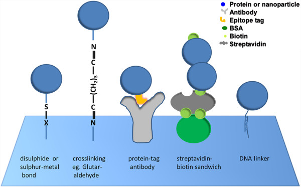 Different bioconjugation schemes. From left to right ...