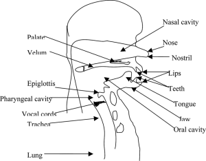 Schematic view of human speech production mechanism