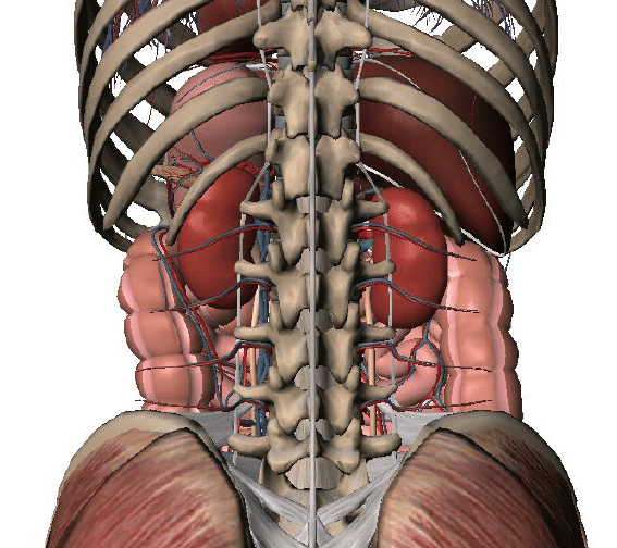 Regions Abdominopelvic Cavity Diagram 9