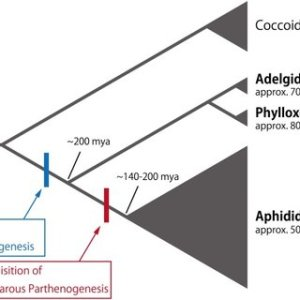 Typical annual lifecycle of aphids (A) Schematic diagram