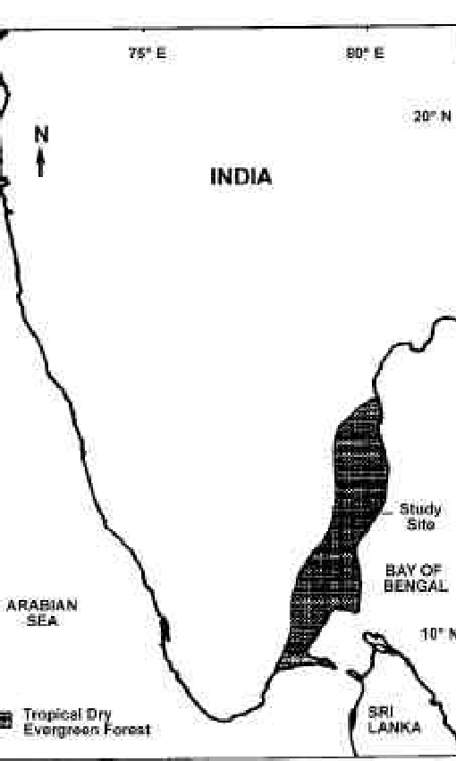The miombo forests in africa, and the dry forests of central india and. Map Of Southern India Showing The Distribution Of Tropical Dry Download Scientific Diagram