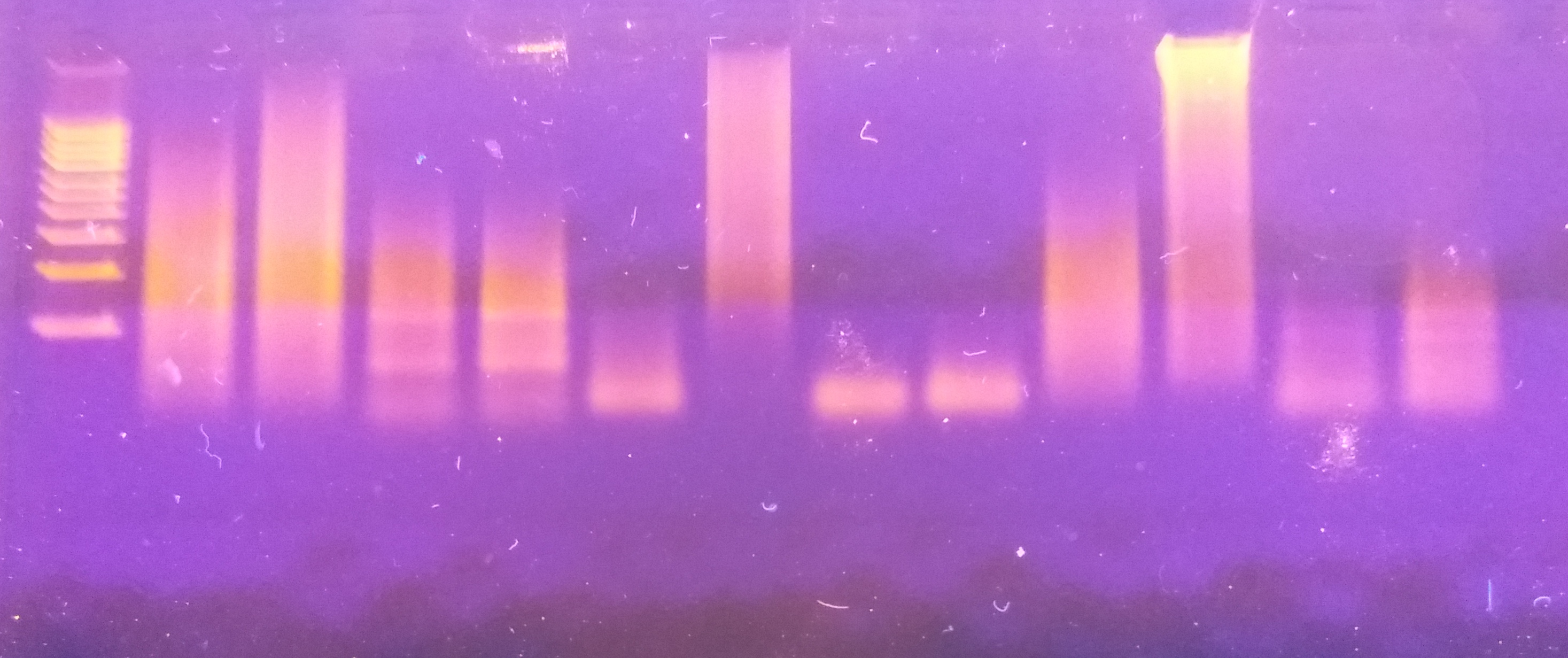 117 Questions With Answers In Sequencing Pcr