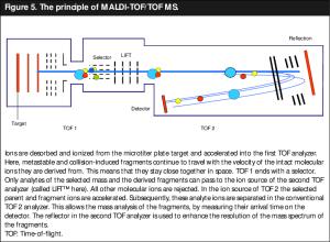 The principle of MALDITOFTOF MS   Download Scientific Diagram