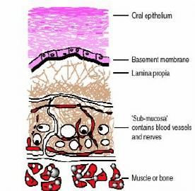 Structure of the human oral mucosa | Download Scientific Diagram