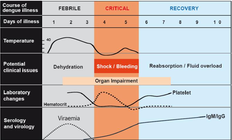fase kritis demam berdarah