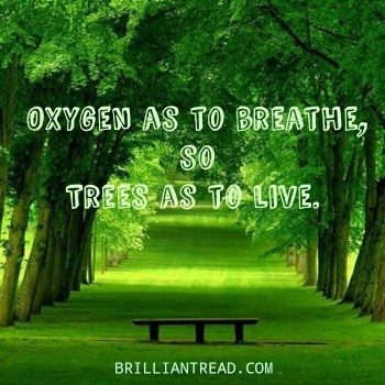 And no attempt made at either natural or artificial reforestation. How Can We Save Trees