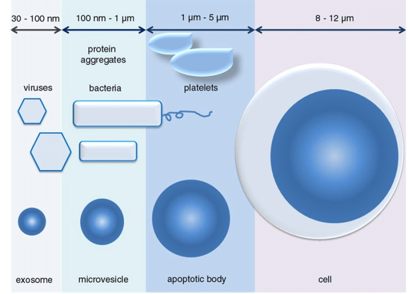 Image result for exosome size