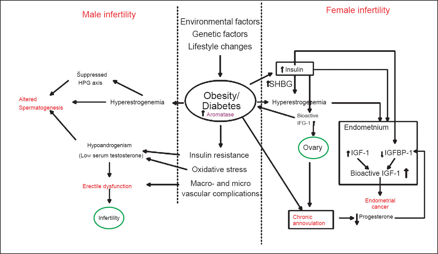 Different Mechanisms By Which Obesity Causes Male