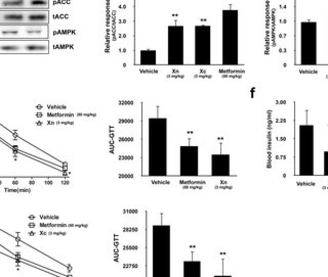 Xn And Xc Increase Ampk Activity And Glucose Utilization In High Fat Diet Induced
