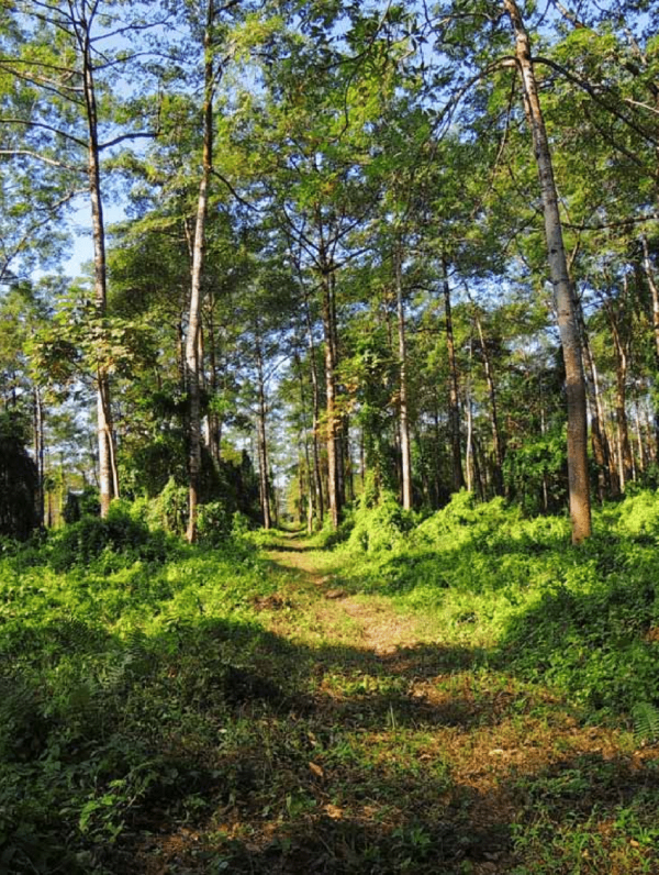 Semi-evergreen forest patches in D'Ering Wildlife ...