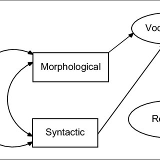 The Relation Of Morphological Awareness And
