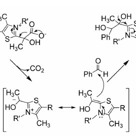 General reaction mechanism for AHAS and PDC mediated ( R )PAC synthesis | Download Scientific