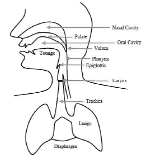 A schematic diagram of the human speech production