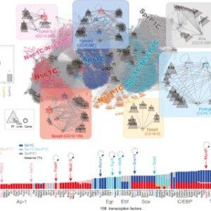 Analysis of TFbinding motif enrichment Heat map showing