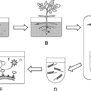 Diagram of soil diagnostic method for PMTV. a Soil sample ...