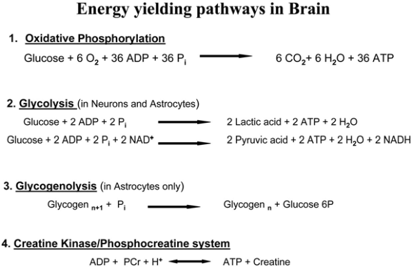 Main metabolic pathways that provide ATP to the cells in ...