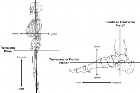 Interior Inferior Anatomical Definition Full Hd Maps Locations