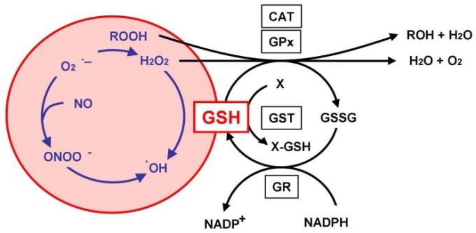 「gpx gst gssg gsh」の画像検索結果