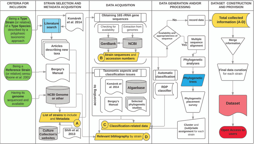 Diagram Illustrating The Workflow Followed During The