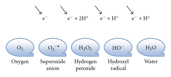 Oxygen And Hydrogen Peroxide Water