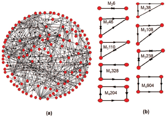 A real-world biological network and some network motifs. (a) A... |  Download Scientific Diagram