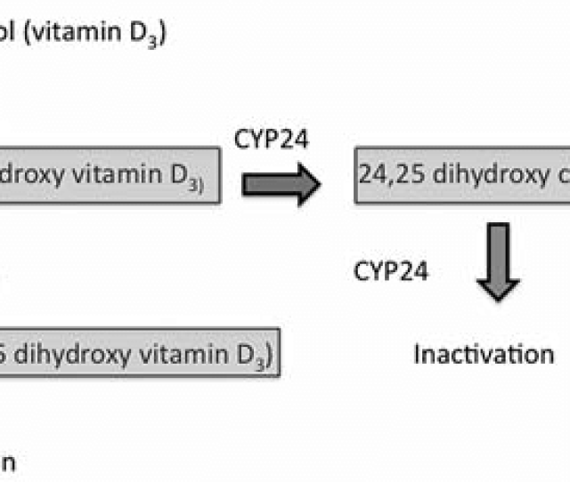 Metabolic Pathways Of The Putative Hormonal Forms Of Cholecalcipherol Vitamin D 3 Cholecalcipherol Hormones Are Labeled With Boxes