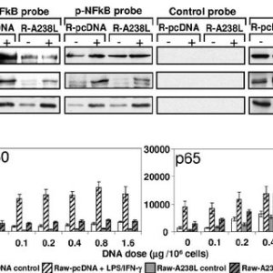 A238L inhibits the acetylation of p65 in stimulated Raw