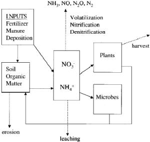 A schematic representation of the nitrogen cycle in | Download Scientific Diagram