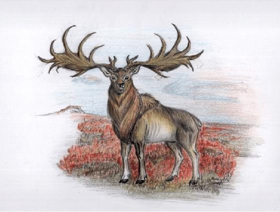 Megaloceros giganteus -a reconstruction. Drawing: Zlatozar Z. Boev ...