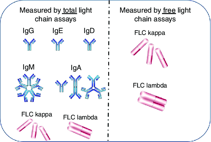 Kappa Light Chain Free