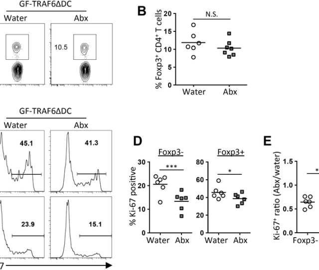 Broad Spectrum Antibiotics Were Given To Gf Traf6 Ce B4dc Bm Chimeras For The Final 2 Weeks And The Mice Were Analyzed 8 Weeks In Total After Reconstitution