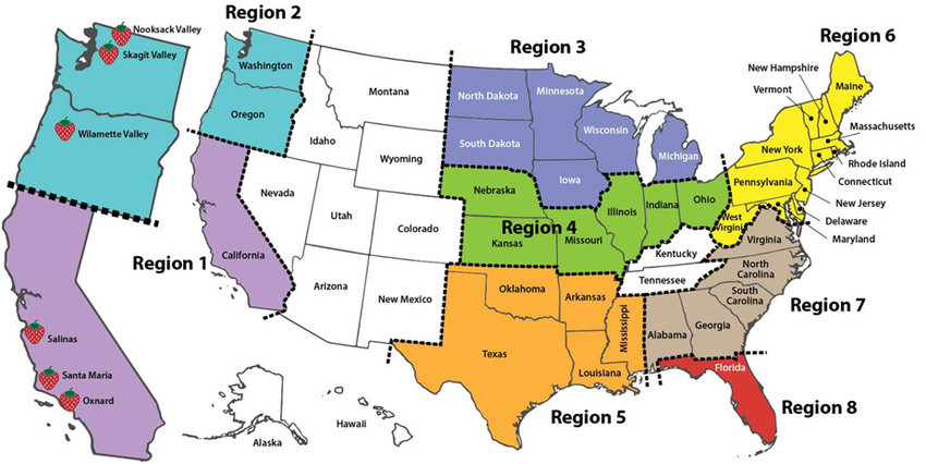 Some of the neighborhoods there are some of the oldest in the country. The Eight Regions Of Strawberry Production In The United States Download Scientific Diagram