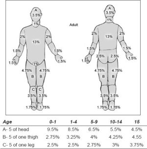 Lund and Browder chart (with age appropriate measurements