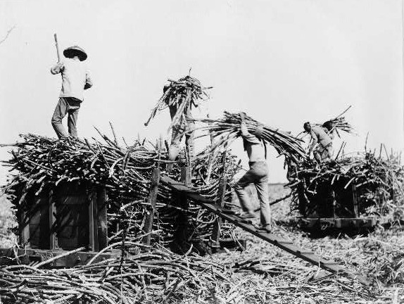 Sugar Plantation Histories Updated at YourIslandRoutes